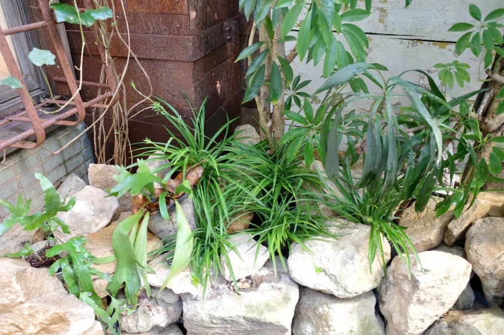 スタジオ 植物 庭